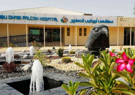 Falcon hospital tour with transport